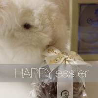 Easter bunnies & the perfect easter egg...